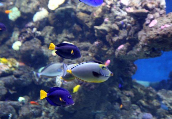 Baltic cruise kbhvn b p fisk farver