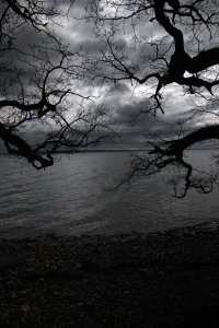 Trees and water black and white Henrik Elstrup and Marina Aagaard