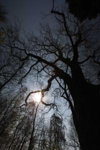 Mols Bjerge tree photo Marina Aagaard