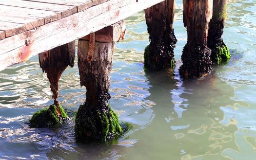 web_Venice_pier_erosion